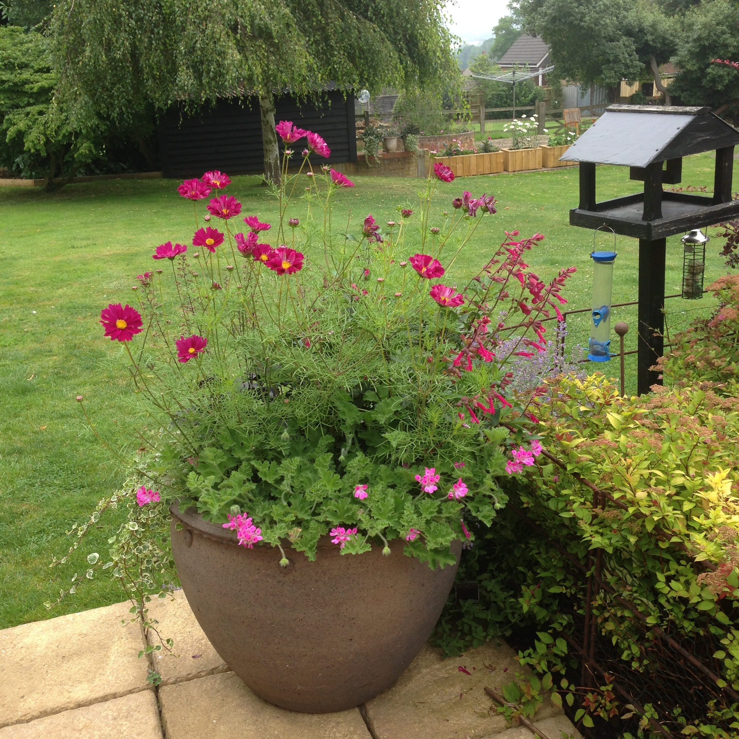 Flowers To Grow In Small Pots: Grow Your Own Flowers Small Garden Special