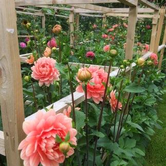 Cutting Garden, Swan Cottage Flowers