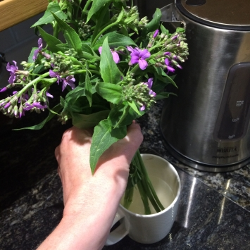 Many cut flowers also benefit from searing especially if they begin to look a bit floppy. Searing involves placing the bottom 1-2 inches (2.5-5cm) of the cut steams in boiling water, this increases the surface area available for the flower to use to absorb water and results in a more turgid and upright stem. Be careful not to cook the stems or allow the steam near the flowers or foliage.