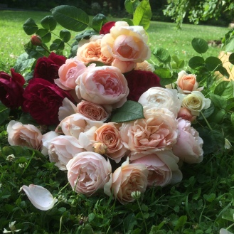 David Austin Roses, Gentle Hermione, Tranquility, Queen of Sweden, Darcey Bussell, Sweet Juliet, A Shopshire Lad, Desdemona Scented Roses