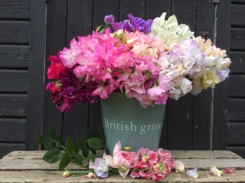British Seasonal Flowers, Sweetpeas for Seasonal Wedding Flowers and Event Flowers, Swan Cottage Flowers, Buckinghamshire