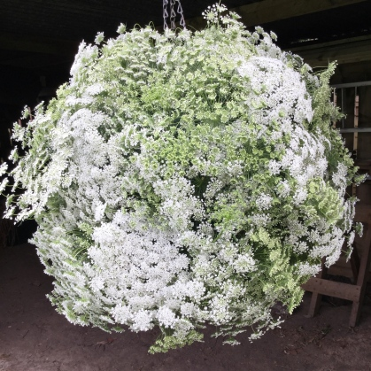 Creating a hanging Ammi majus Flower Bomb, Hang your globe at a comfortable working height, not its final hanging position.