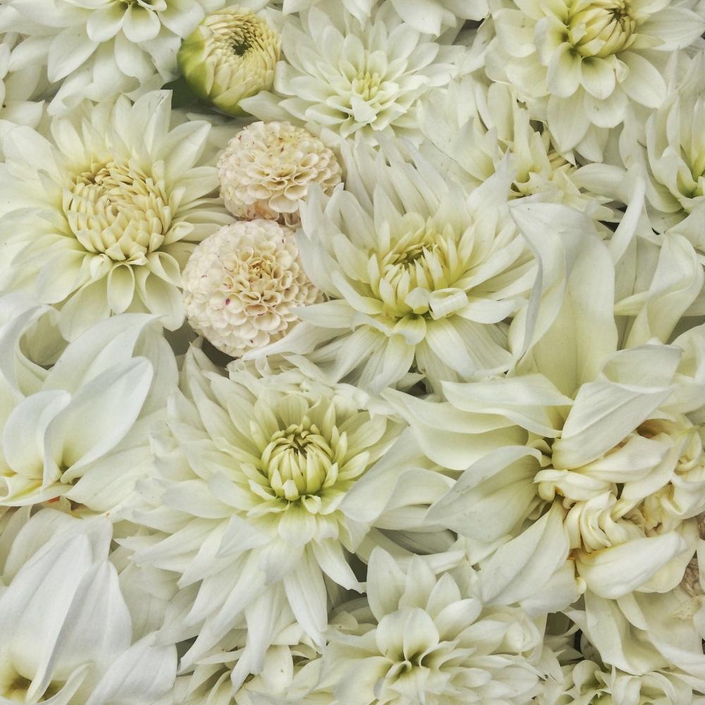 The perfect British Seasonal Wedding Bouquet, Dahlia's Small World, Lady Liberty, Karma Serena, Karma Maarten Zwaan, White Perfection
