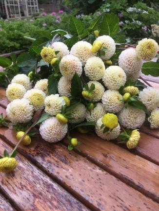 Dahlia 'Small World' Swan Cottage Seasonal Wedding Flowers