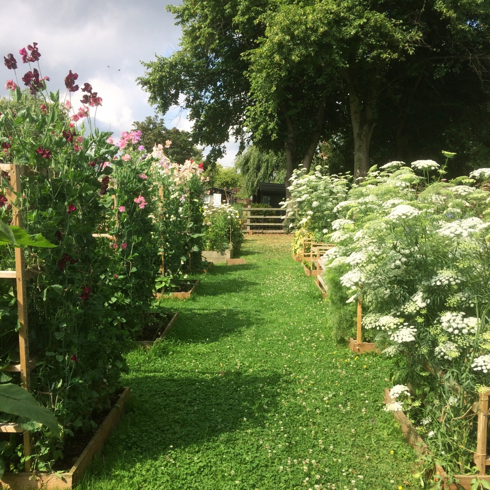Swan Cottage Flower Farm, the field High Summer 2017