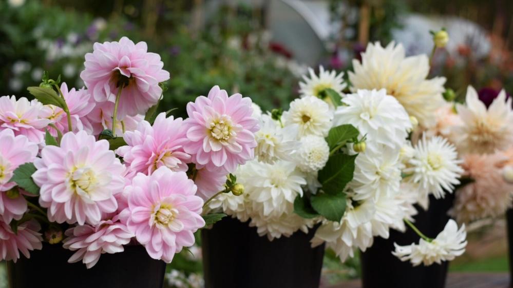 Wedding Flowers, Swan Cottage Flower Farm, Seasonal Wedding Flowers