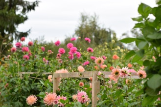 British Wedding Florist, Tulips to fragrant sweet peas, magnificent dahlias and countless varieties in between, we harvest only the best of what is blooming each day from our Flower Field in Buckinghamshire