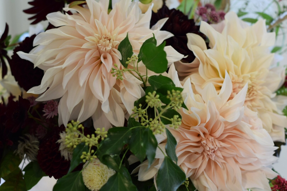 Cafe Au Lait Dahlias give impact, British Flowers grown in season win hands down on quality!