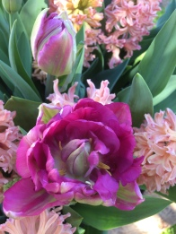 Swan Cottage Flowers Bulb Lasagna of Hyacinth Gypsy Queen, Tulip Antraciet, Tulip Black Hero, Tulip Orange Princess, Tulip Royal Acres