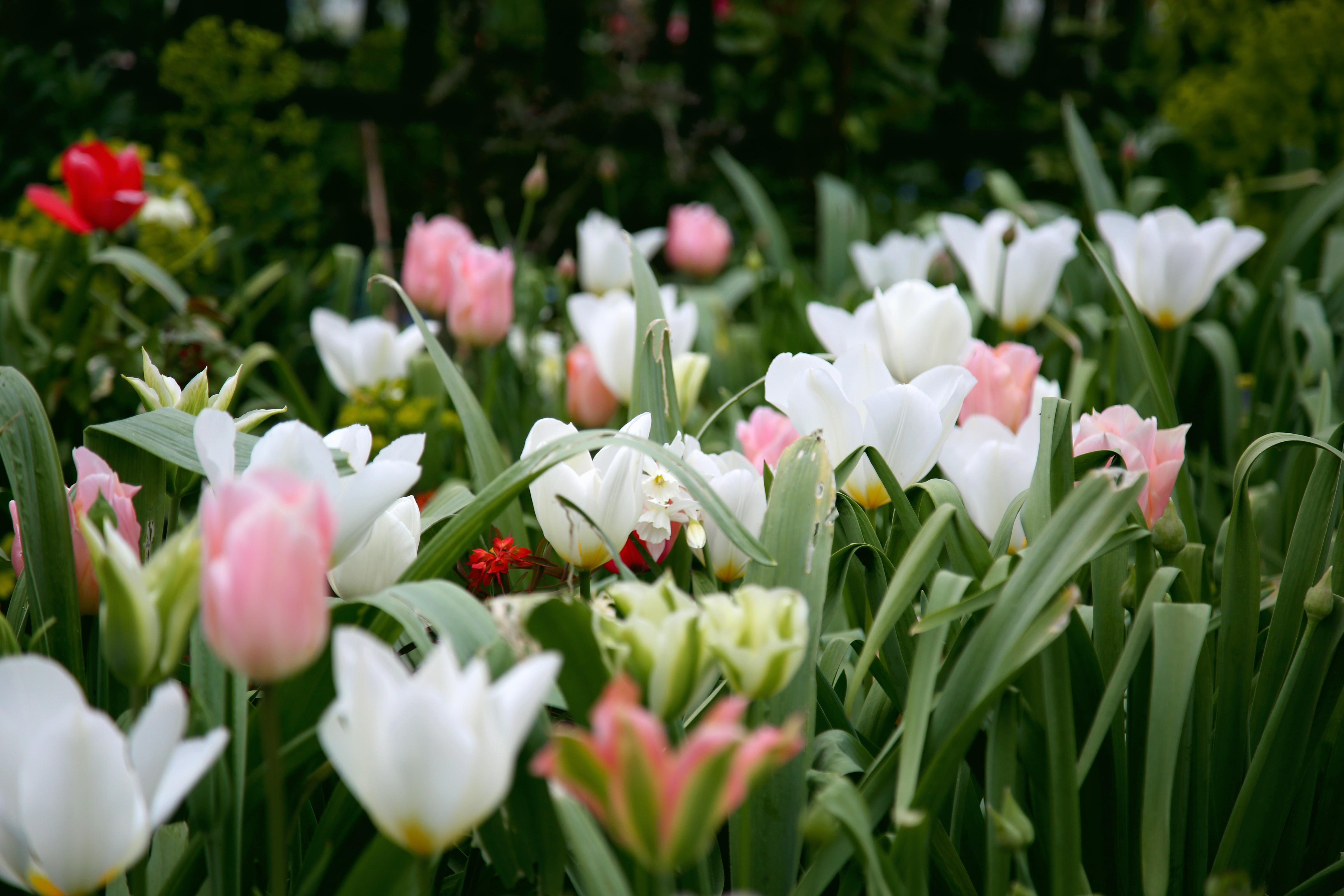 Tulip Time British Spring Wedding Flowers Tulips Vivchic Spring