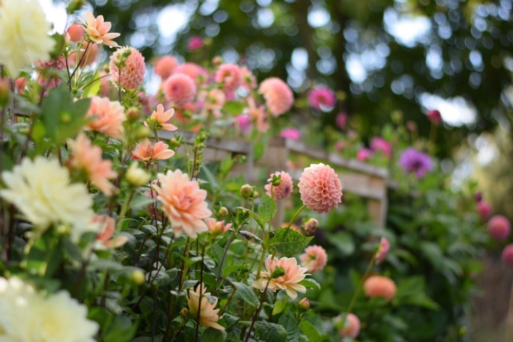 Swan Cottage Flower Farm specialist in DIY Flowers