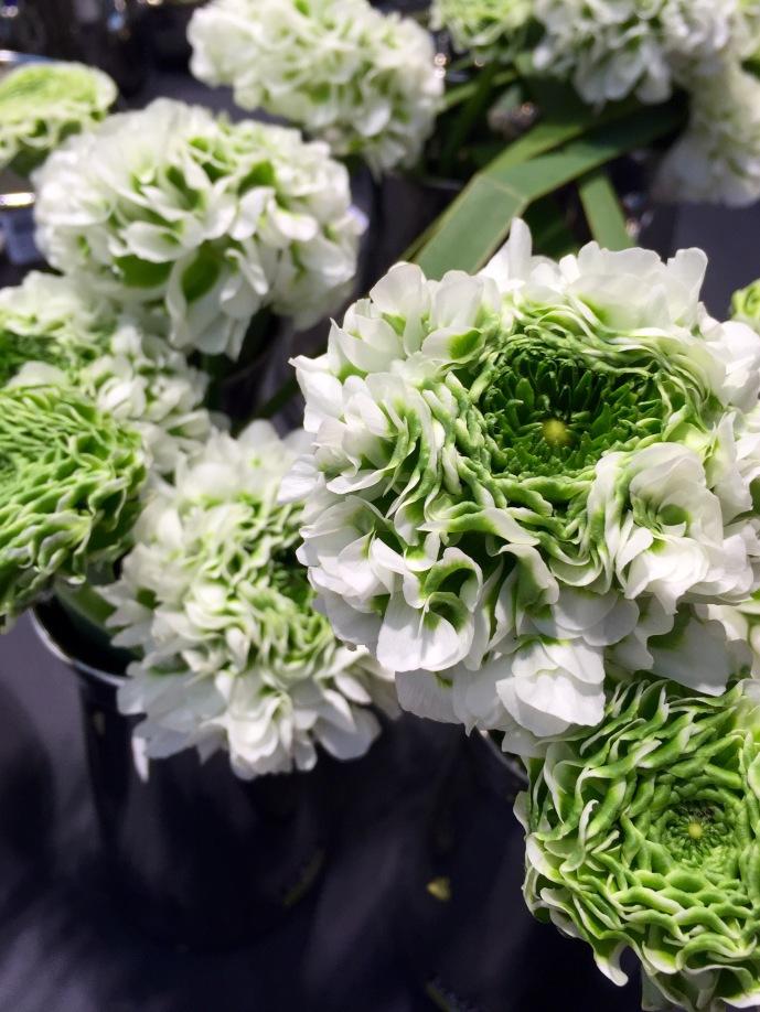 Italian Ranunculus Igloo