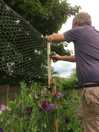 Neil Woodward, Swan Cottage Flowers, Extending the Sweet Pea Supports